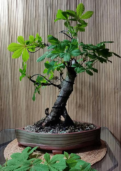 The Features of Bonsai