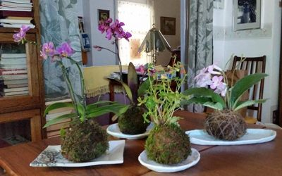Kokedama for my holiday shows