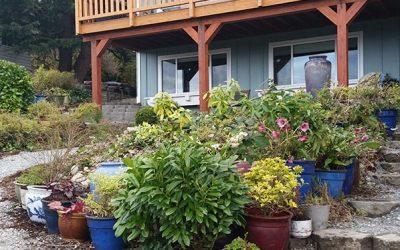 My Newest Service– Patio Garden Design