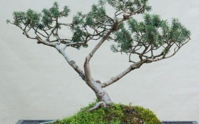 Open Studio and Bonsai Sale Today!