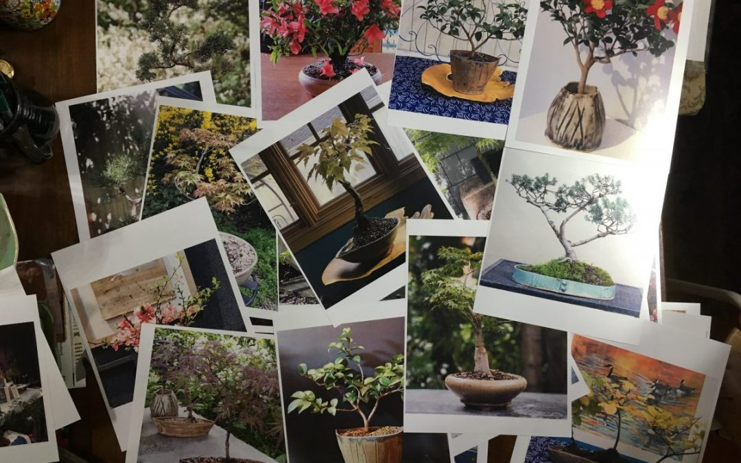 "Enjoy a ""Gallery of Bonsai"" with Our First Calendar!"
